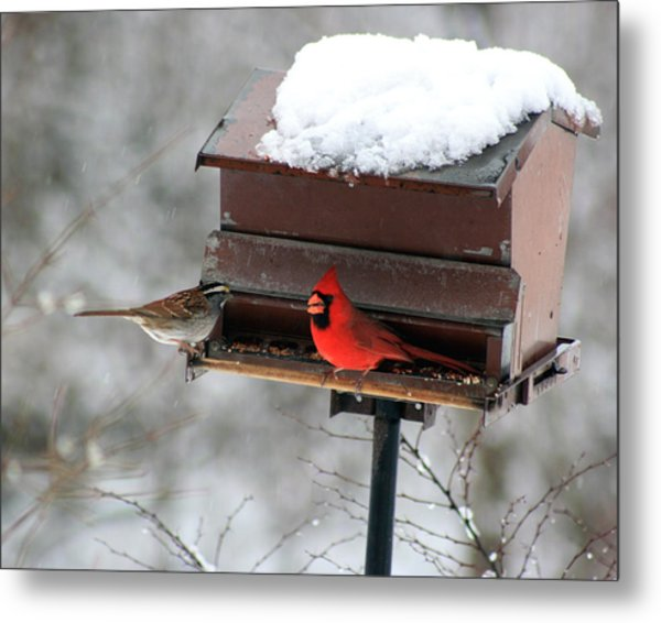 Cardinal And Sparrow At Feeder Metal Print