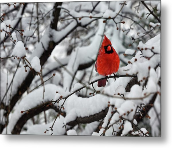 Cardinal In The Snow 2 Metal Print