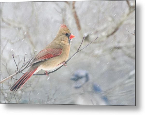 Cardinal In Winter Metal Print