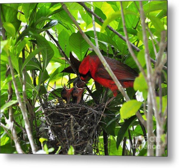 Cardinals Chowtime Metal Print