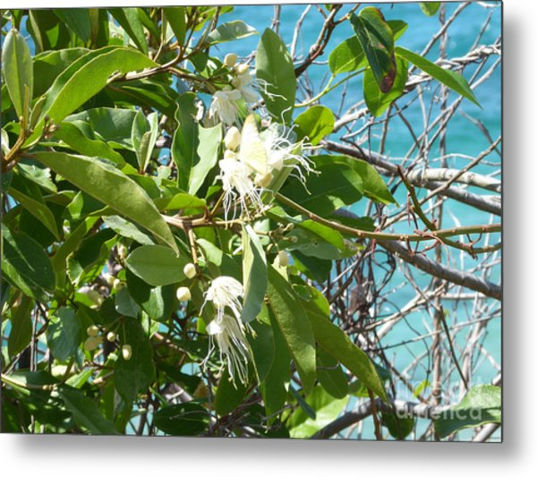 Caribbean Honeysuckle Metal Print