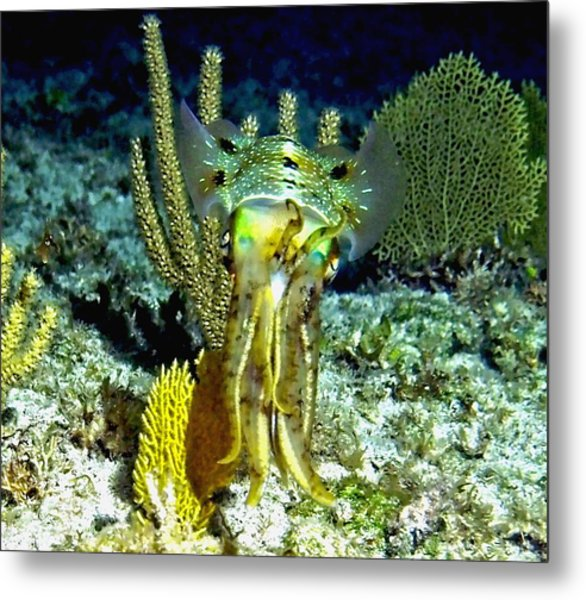Caribbean Squid At Night - Alien Of The Deep Metal Print