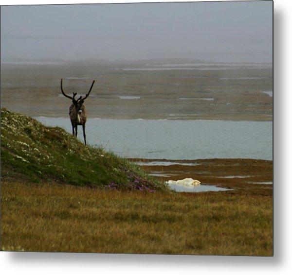 Caribou Fog Metal Print