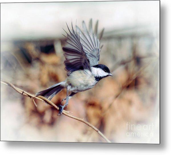 Carolina Chickadee - Come Fly With Me  Metal Print