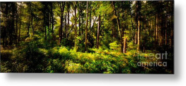 Carolina Forest Metal Print