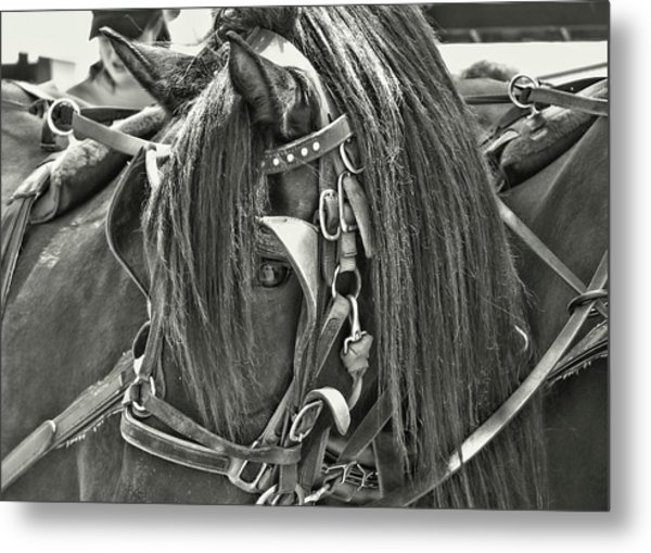 Carriage Horse Beauty Metal Print by JAMART Photography