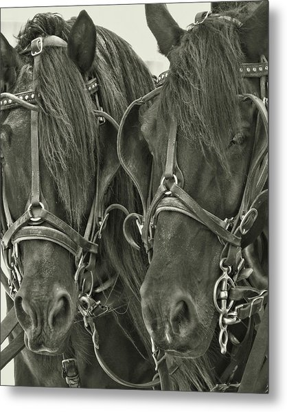 Paired Carriage Ponies Metal Print by JAMART Photography