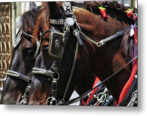 Carriage Tour Metal Print by Dressage Design