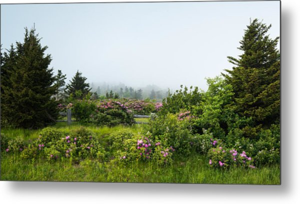 Carvers Gap Pisgah Cherokee National Forest Appalachian Trail Metal Print