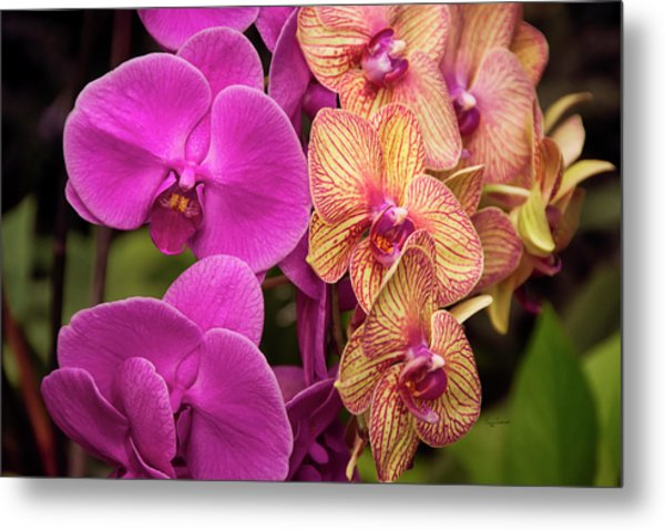 Metal Print featuring the photograph Cascading Orchids by Penny Lisowski