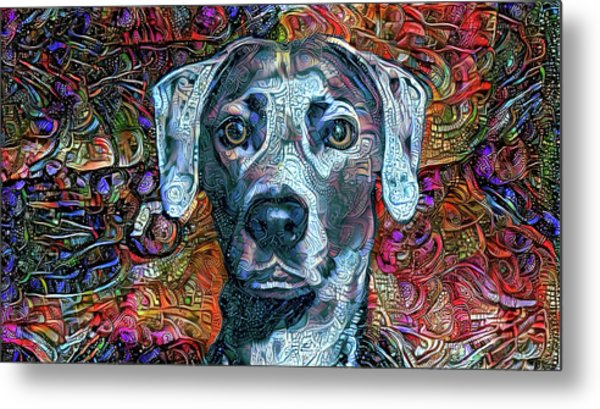 Cash The Blue Lacy Dog Metal Print