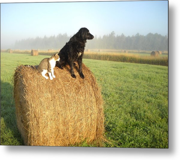 Cat And Dog On Hay Bale Metal Print