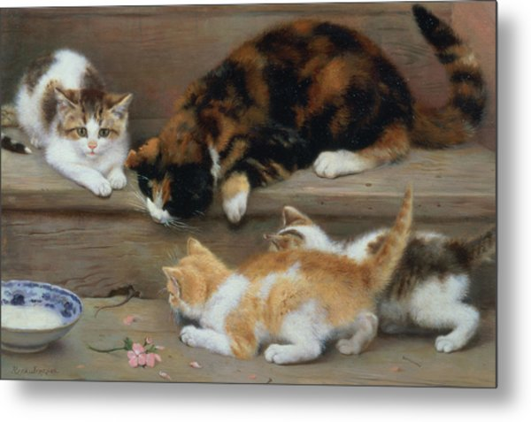 Cat And Kittens Chasing A Mouse   Metal Print