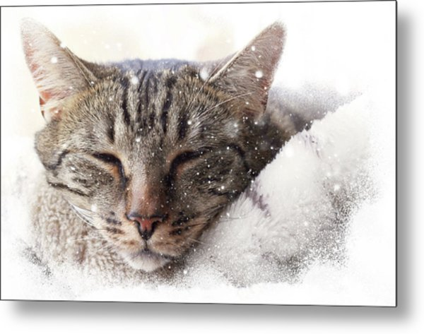 Cat And Snow Metal Print