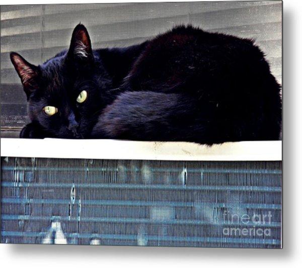 Cat Conditioner Metal Print