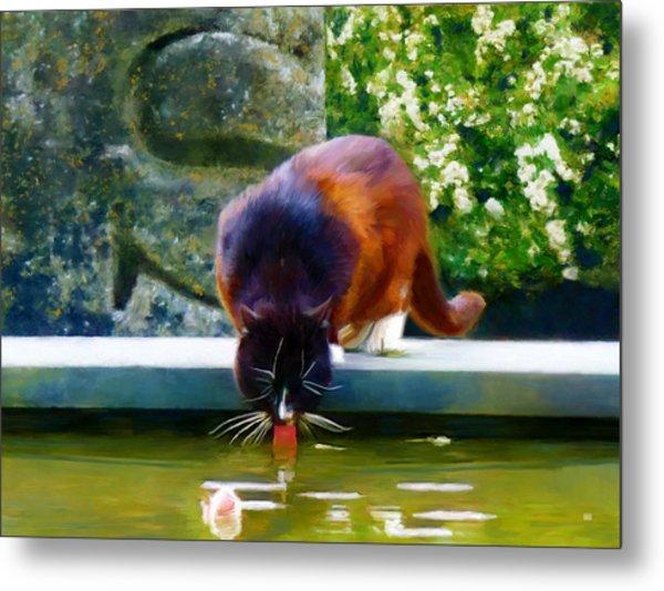 Cat Drinking In Picturesque Garden Metal Print by Menega Sabidussi