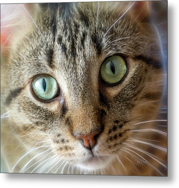 Cat Eyes With Glow Metal Print