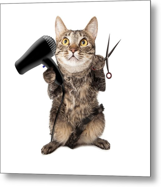 Cat Groomer With Dryer And Scissors Metal Print