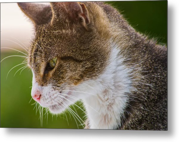 Cat Hunting Metal Print