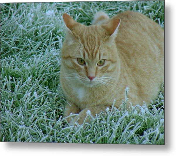 Cat In Frosty Grass Metal Print