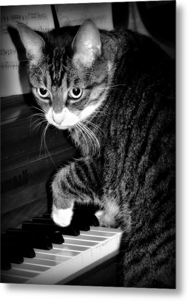 Cat Jammer Metal Print