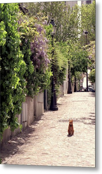Cat On Cobblestone Metal Print