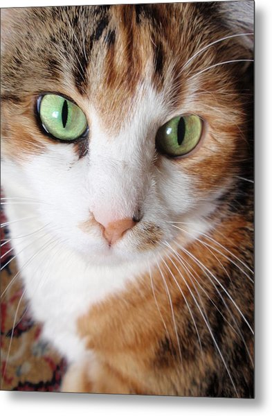 Cat Portrait Metal Print by Valia Bradshaw