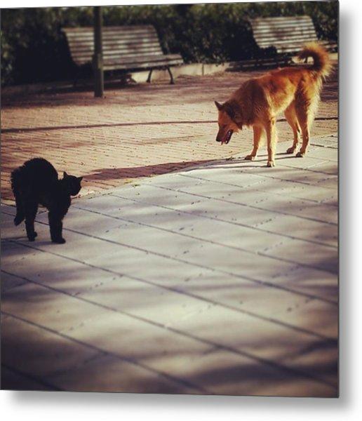 Cat Versus Dog Tension... #dog #animal Metal Print
