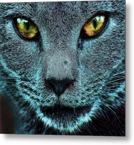Cat With Golden Eyes Metal Print