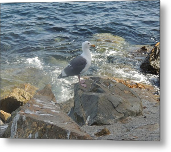 Catalina Island Native Metal Print