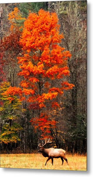Cataloochee Color Metal Print