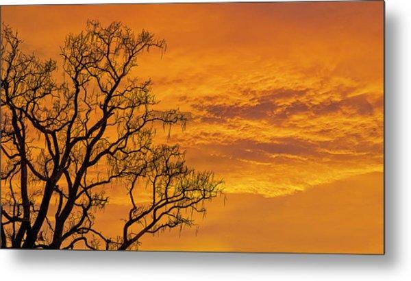 Catalpa Tree Sunrise Metal Print