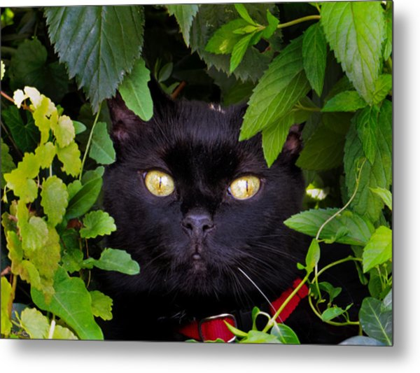 Catboo In The Wild Metal Print