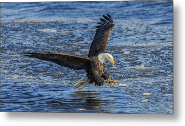 Catching Lunch Metal Print by E Mac MacKay