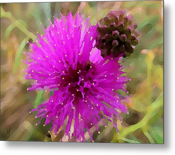 Catclaw Pink Mimosa  Metal Print