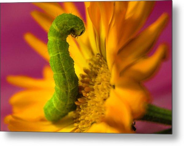 Caterpillar In Flower Metal Print