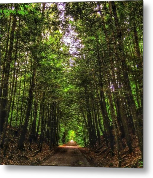 Cathedral Forests Metal Print