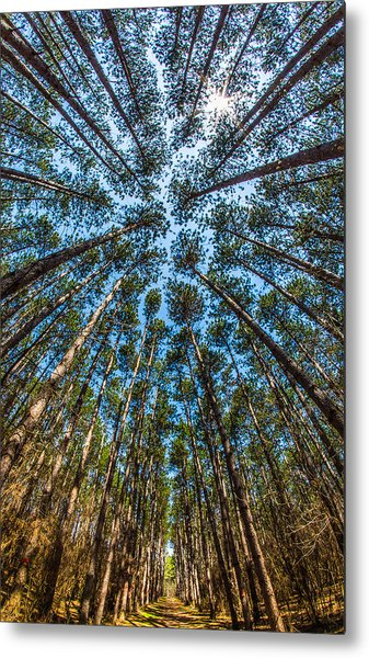 Cathedral In The Pines Metal Print