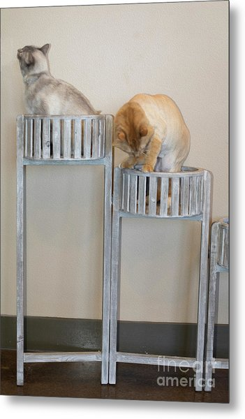 Cats In Baskets Metal Print