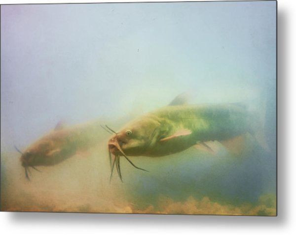 Cats In The Water Metal Print