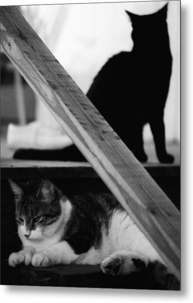 Cats Pose For Money And Fame Metal Print