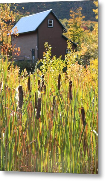 Cattails And Barn Metal Print