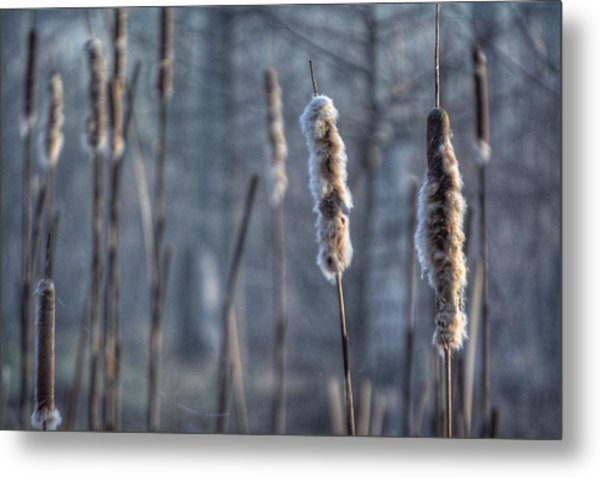 Cattails In The Winter Metal Print