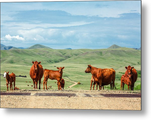 Cattle Guards Metal Print