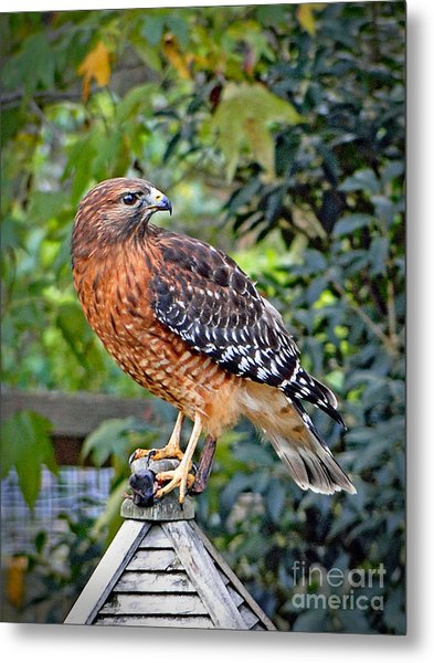 Caught In The Talons Metal Print
