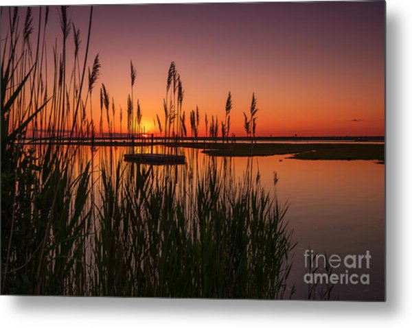 Cedar Beach Sunset In The Reeds Metal Print