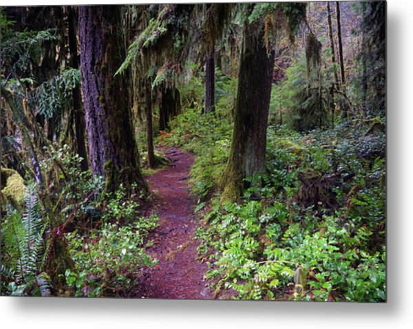 Cedar Creek Trail #3 Metal Print