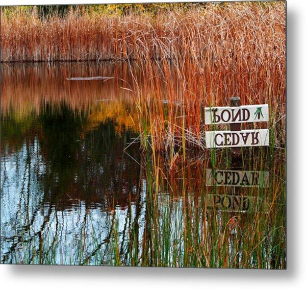 Cedar Pond Metal Print