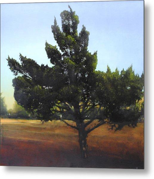 Cedar Sold Metal Print