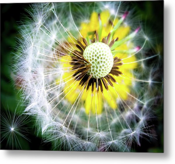 Celebration Of Nature Metal Print